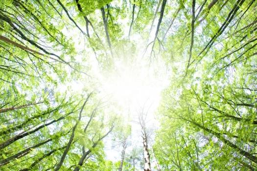 BiShvat – Año Nuevo del Reino Vegetal