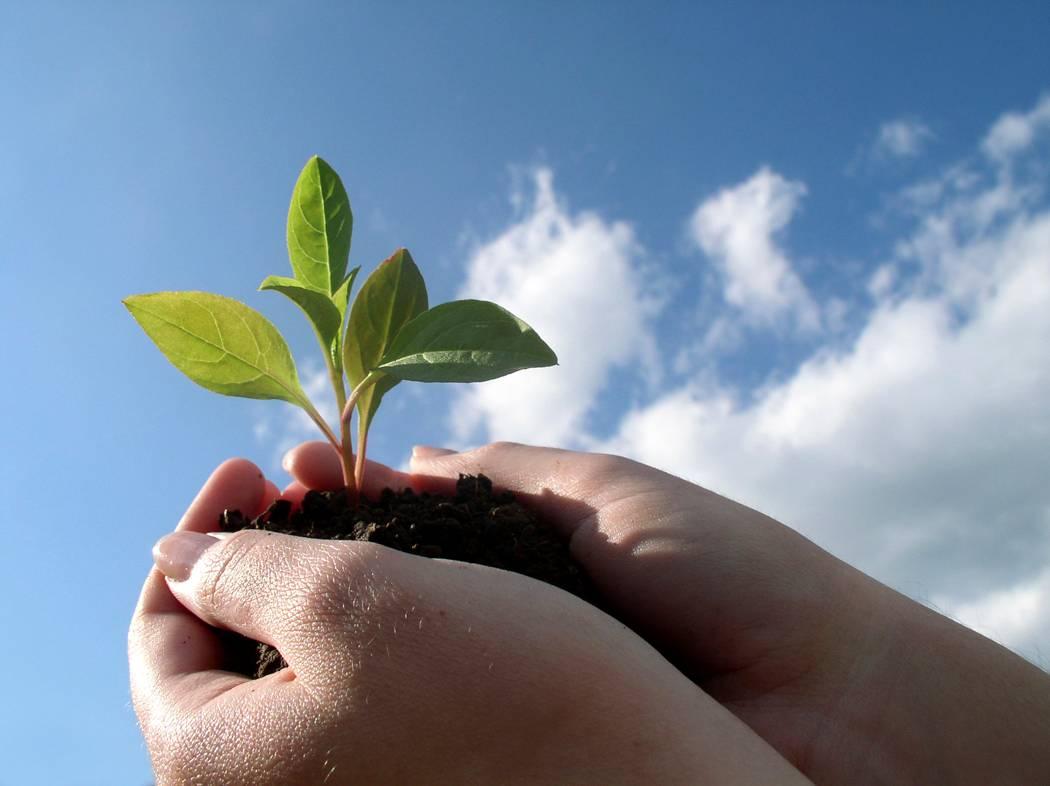 cultivar-paciencia
